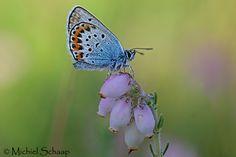 Bekijk de natuur foto's van natuurfotograaf Michiel Schaap.
