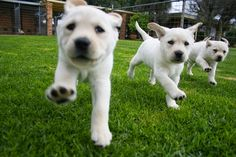 ThePetnet: Pets A to Z & more