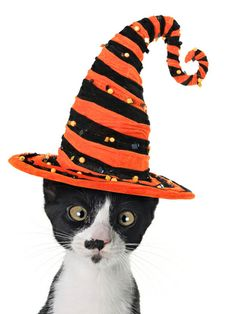 hannamariah-cross-eyed-kitten-wearing-a-halloween-witch-hat