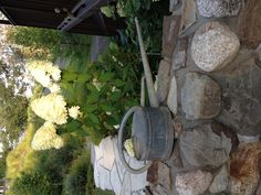 Antique Schneiderkanne and Hydrangeas!! Love the rock walkway and wall!!