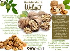 One of the major nutritional characteristics and benefits of walnuts is the ability to nourish and support brain and nervous system function.
