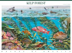 US 4423 Stamps for sale Kelp Forest Stamp Pane Nature of America Series US Kelp Forest, Forest Pictures, Fresh, Pics Art, Mail Art, Stamp Collecting, Picture Design, Postage Stamps, Nature