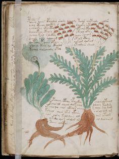 #VoynichManuscript | #CipherManuscript | Page 87 (2) | Original Pin Cormael Lia http://www.pinterest.com/cormaellia/voynich-manuscript/