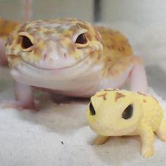 Фотографии с улыбающимся гекконом и его маленькой копией скрасят ваш день