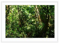 05 - Floresta tropical 3