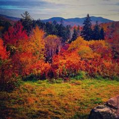 Fall in NH