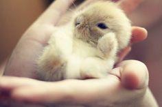 i remember having baby bunnies. so flippin cute