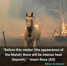 Imam Reza, Ya Ali, Islamic Pictures, Islamic Quotes, Hearts, Wisdom, Horses, Animals, Animaux