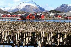 stockfisch norwegen lofoten shutterstock_631328540 Lofoten, Holidays In Norway, Fjord, Tromso, Mount Rainier, Mount Everest, Mountains, Nature, Travel