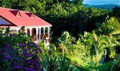 Discover Habitation Grande Anse: A Tropical Hotel in Guadeloupe https://www.caribbeanbluebook.com/articles-and-blogs/discover-habitation-grande-anse-a-tropical-hotel-in-guadeloupe/144.html?utm_content=buffer9da59&utm_medium=social&utm_source=pinterest.com&utm_campaign=buffer #Caribbean #Hotel #Vacation #Travel #Tourism