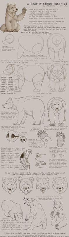 TIPS BEAR-consejos de cuerpo de boca y partes del cuerpo de un oso
