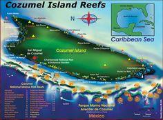 dive Cozumel's reefs