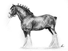 Clydesdale by Bright-Button on DeviantArt