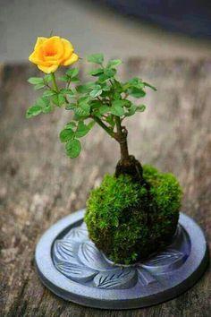 Smmaalll roseyyy