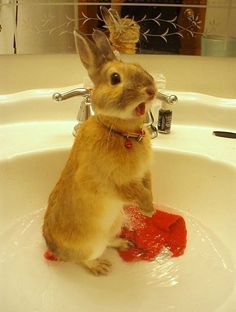 Rabbits can go into shock if immersed  in water. If you have to wash a rabbit, fill a bath/tub with about an inch of water. Put a towel in the bottom of the bath so the bunny has some grip...