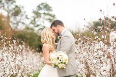Cotton field as backdrop
