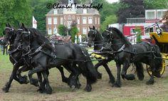 5 Friesian Carriage Side view by Amethyst--Dragon.deviantart.com on @deviantART