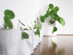 1000 kereklevel t z rvir g pilea peperomioides n v nyek pinterest. Black Bedroom Furniture Sets. Home Design Ideas