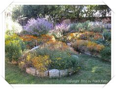 Central Texas butterfly garden.  Rainbow Gardens in San Antonio--a good place to know about!
