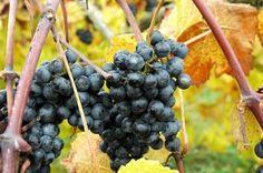 Virginia, uno de los Diez Mejores Destinos del Mundo para 2012 de acuerdo a la Revista Wine Enthusiast