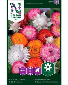Kaunis ja värikäs kesäkukka. Nelson Garden, Floral Wreath, Wreaths, Spring, Decor, Lily, Floral Crown, Decoration, Door Wreaths
