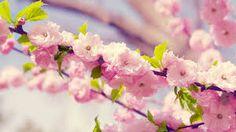 花 を 咲く