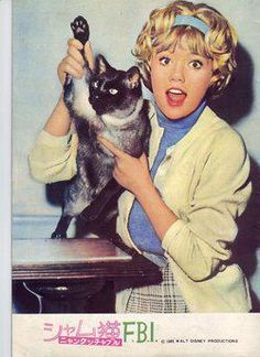 "Hayley Mills and friend in ""That Darn Cat"" Old Disney, Vintage Disney, Disney Live, Hailey Mills, Old Hollywood Movies, Star Pictures, Cat People, Siamese Cats, Musica"