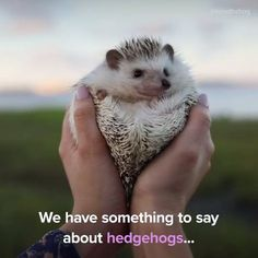 Hedgehogs are full of pure joy.