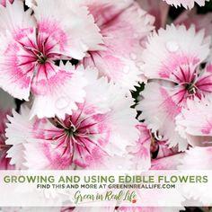 Beautiful Edible Gardens: Growing Edible Flowers - Green in Real Life Edible Flowers Cake, Champagne Vinaigrette, Flower Tower, Sour Cream Cake, Patio Planters, Garden Journal, Flower Food, Companion Planting, Edible Garden