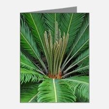Cycad Palm (cycas) Note Cards (Pk of 20) for