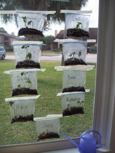 Great activity with children - learning about seeds, sprouts, and parts of a plant.