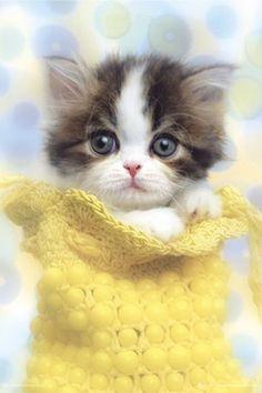 Kitten!  - youtube cats funny luvpop