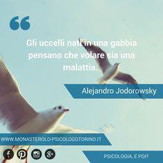 Gli uccelli nati in una gabbia pensano che volare sia una malattia. #Jodorowsky #Aforismi