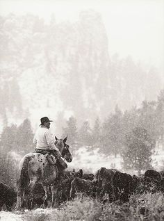 PENTAX Photo Gallery : Cattle Drive  645n