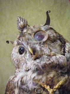 Faux Taxidermy, Rogues, Owl, Bird, Animals, Animaux, Owls, Birds, Animal