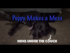 Dog Training Video guides