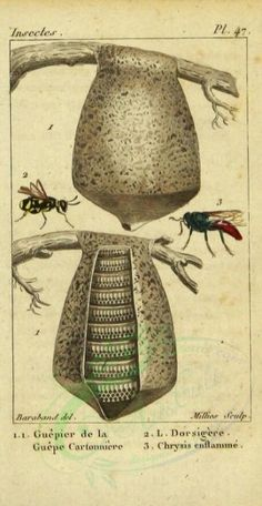 clytra, 276 - high resolution image from old book. Botany Books, Digital Decorations, Old Art, Garden Sculpture, Insects, Digital Art, Vespa, Paper Craft, Illustration