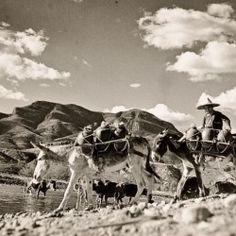 126Leo Matiz (1917-1998)  Campesino transportando vasijas en un burro, 1960-1970.