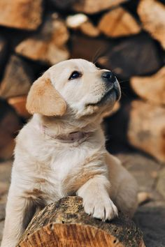Hier unsere schönsten Hundebilder und Foto… Everything dogs dog puppies love. Here are our most beautiful dog pictures and photos of puppies Havanese Puppies, Cute Puppies, Dogs And Puppies, Labrador Puppies, Poodle Puppies, Ticks On Dogs, Puppy Mix, Tier Fotos, Retriever Puppy