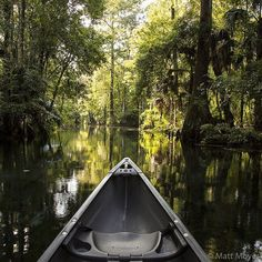 Photo by @mattmoyerphoto // (3 of 8) Morning light makes a perfect companion for a paddle through Floridas Silver Springs State Park. #NatGeoTravelStories // Follow along this weekend as @mattmoyerphoto and @carltonward share photographs from their recen