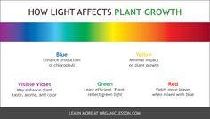 Light Effect Color Plant Growth