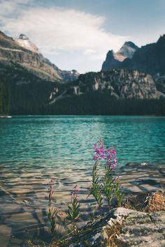 Lake O'Hara British Columbia Canada [OC][1333X2000]