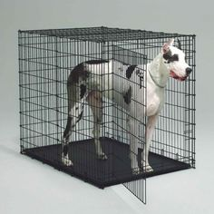 Petme Prima Durable Double Door Folding Dog Crate - Premium Pro Model w/ Divider and Tray (XXX Large) - http://www.thepuppy.org/petme-prima-durable-double-door-folding-dog-crate-premium-pro-model-w-divider-and-tray-xxx-large/