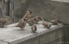 Gladiator, sparrow-style