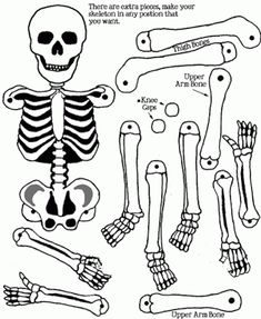 Good resource. Brass tack skeleton.