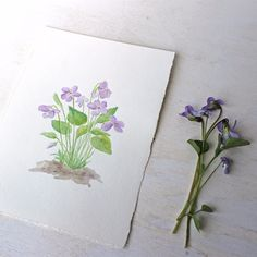 A small original watercolour painting of one of spring's sweetest flowers: the…
