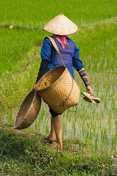Farmer in the rice field represents the hardworking that is Vietnam Laos, Vietnam Voyage, Vietnam Travel, We Are The World, People Of The World, Rice Plant, Beautiful Vietnam, Rice Paddy, Thinking Day