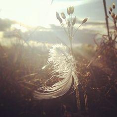 bythebrush on instagram