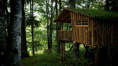 At Least Once-in-a-Life-Time Stay in A Tree House on Spoty