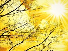 golden afternoon......Imagine warm Sunshine, and lying in a field of Daisies..... Such Peace......